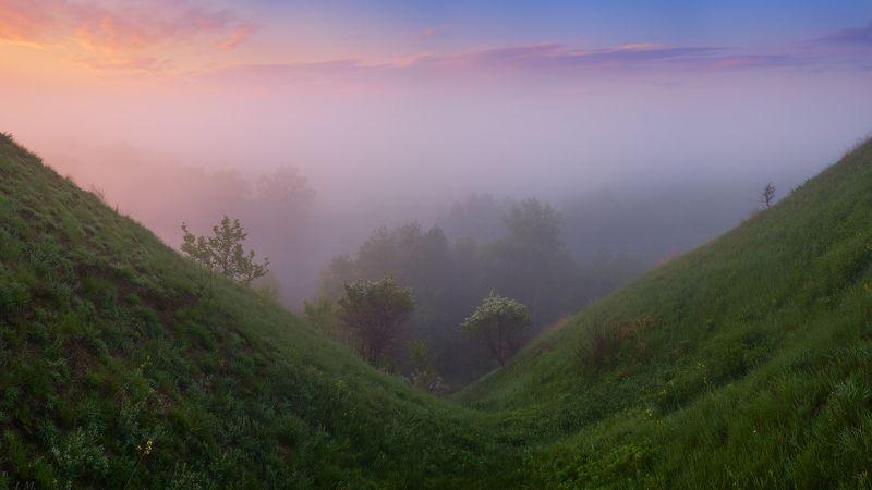 утро, рассвет, свет, лето, туман, панорама, деревья, облака,  mist, trees, sky, sunrise, fog, morning, blue, light, clouds, tree, summer, beautiful, grass, colors, green, panorama, valley, hill, misty, early, foggy, wide angle, hillside Туманная долинаphoto preview