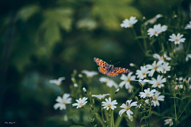 бабочка,цветы, желтый, лапки, цвет ***photo preview