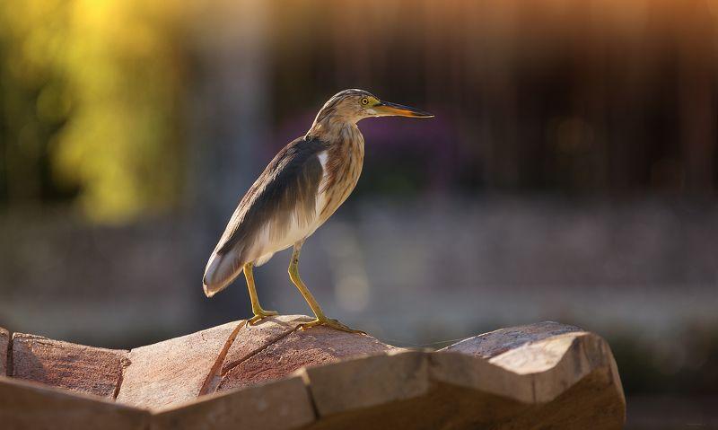 природа, животные, птицы, индонезия На закате дняphoto preview