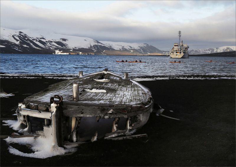 антарктика, путешествие, океан, рассвет, остров, корабль, природа, снег, свет, landscape, nature, light, morning Пейзаж с водоплавающимиphoto preview