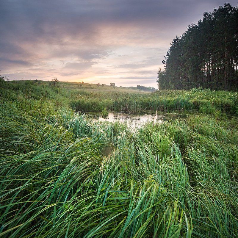 пейзаж, болото, утро Осокаphoto preview