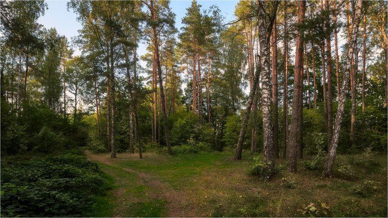 На опушке лесаphoto preview