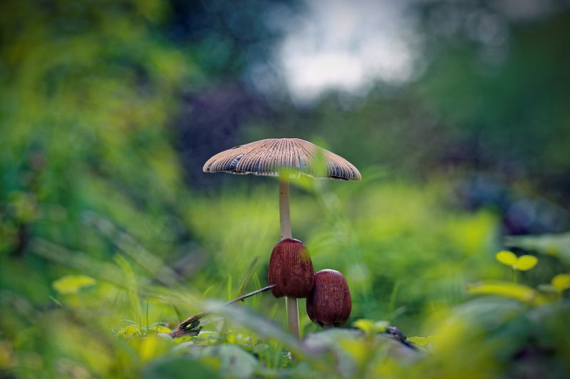 mushroom, tree, nature, macro, centered, center, green, brown, forms Familyphoto preview
