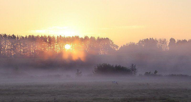 Туман-вечной тайны волшебствоphoto preview