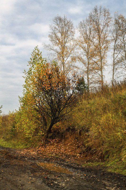 осень Из осеннего альбомаphoto preview