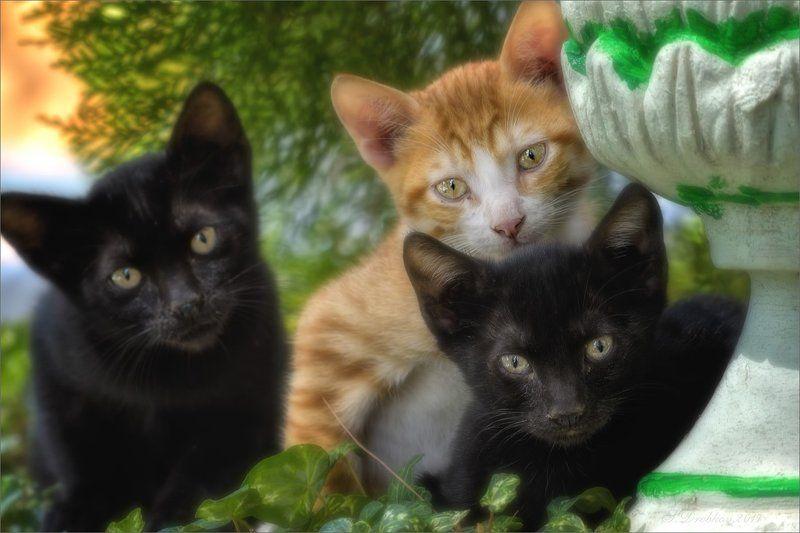 кошки, рыжий, портрет, чёрный Братьяphoto preview