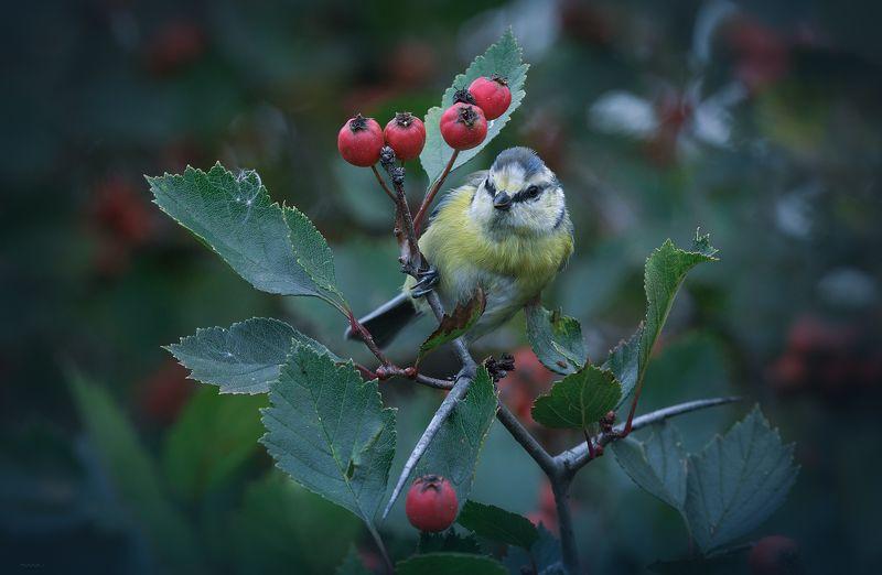 природа, лес, животные, птицы В дозореphoto preview