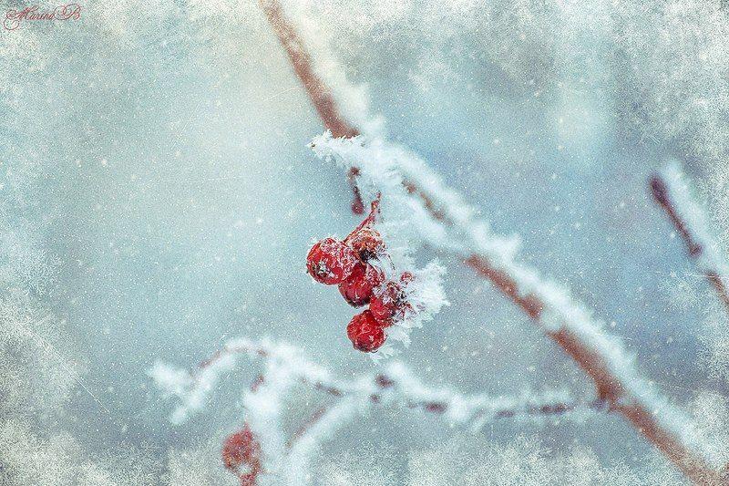 зима, снег, иней, ягоды, лист березы, сосна, макро Зимняя сказкаphoto preview
