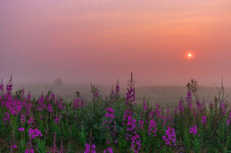 ямал , сибирь, природа, салехард , рассвет, ямал , туман там за туманами ...photo preview