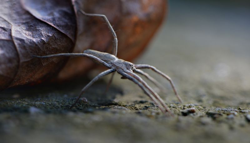 природа, макро, насекомые, паук, лист, точка опоры, Точка опорыphoto preview