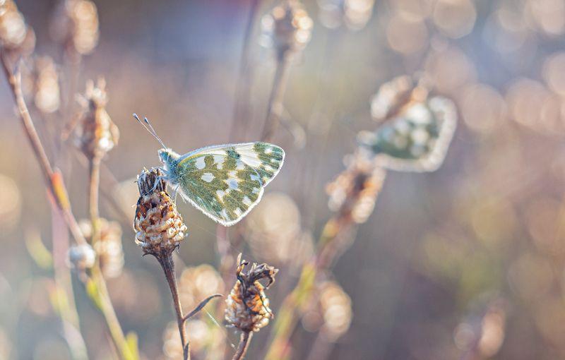 бабочка,цветы, желтый, лапки, цвет Озарение светомphoto preview
