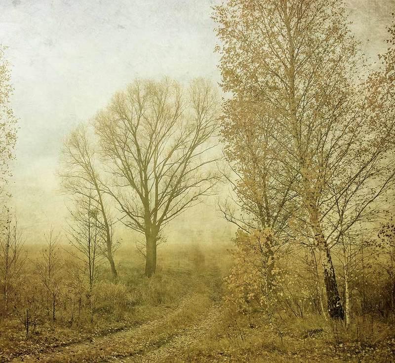 ...роняя последние листья...photo preview