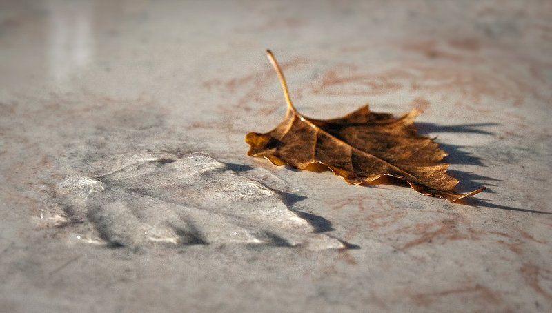 Осенне-зимний переходphoto preview