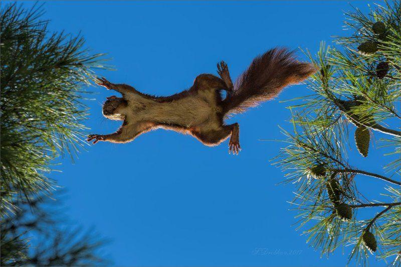 белка, лес, осень, фауна Свободный полётphoto preview