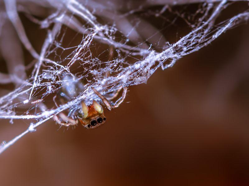 природа, макро, паук, скакунчик, кактус, маммиллярия Наружкаphoto preview