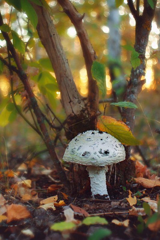 гриб,ветки,блики,свет,листва,мох ***photo preview