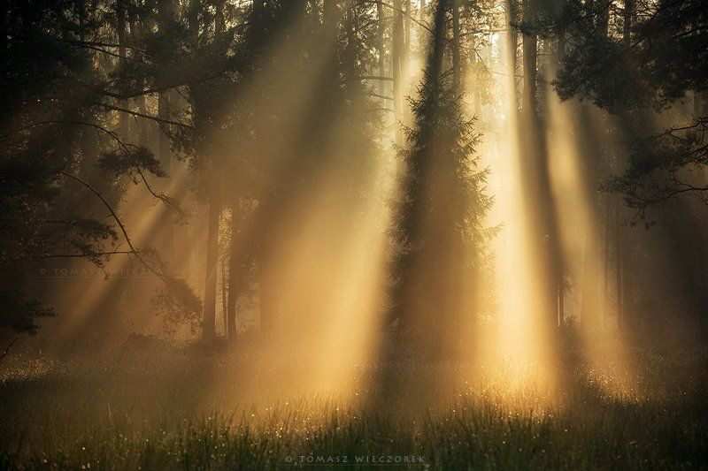 light, silesia, poland, forest, fog, mist, shadows, beauty, mistery, morning, sunrise Beauty of naturephoto preview