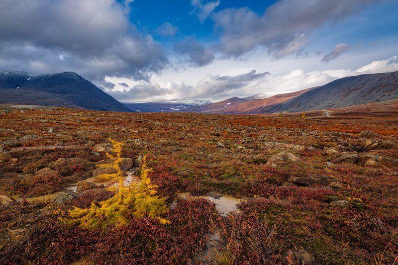 Осень на Полярном Уралеphoto preview