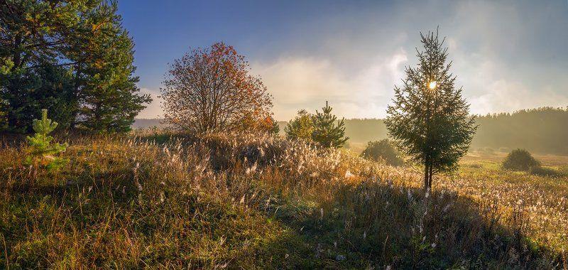 осень туман желтый утро солнце паутина паутинка дыханье сентябряphoto preview