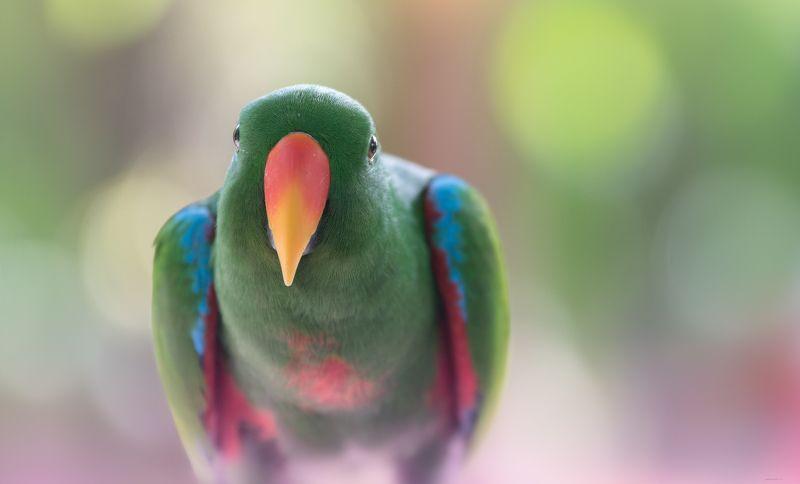 природа, животные, птицы, индонезия Тут немножко посижу ..., послушаюphoto preview