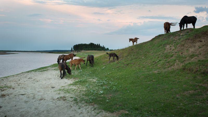 Лошади в ночном.photo preview