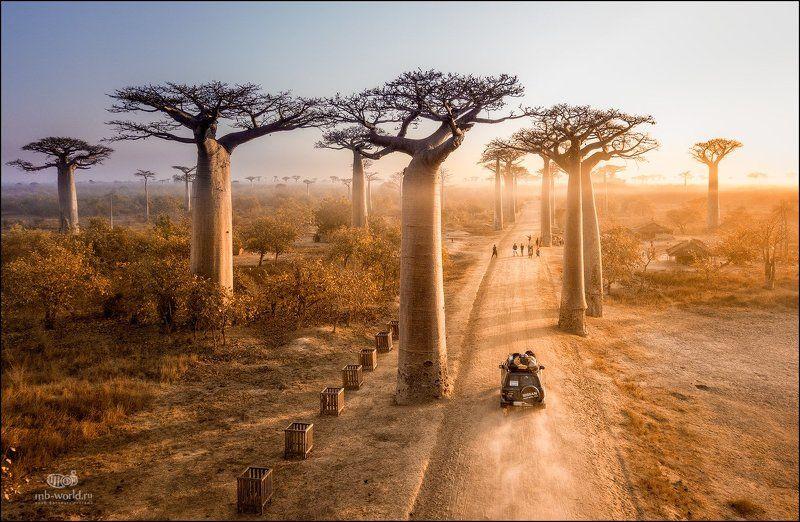 Мадагаскар, долина баобабов, путешествие, фототур Рассвет в долине баобабовphoto preview