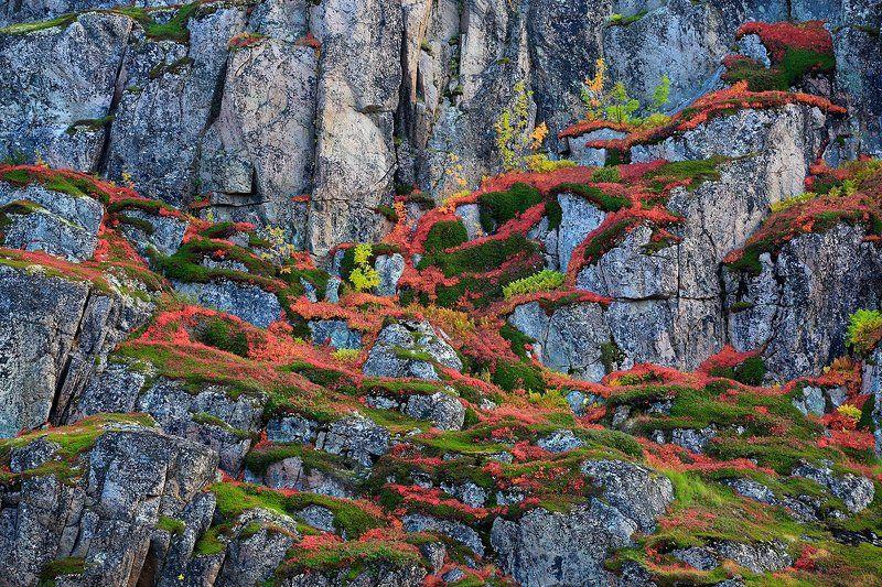 фактура,  краска, осенняя тундра, Териберка, Кольский полуостров, скалы, растения фактуры и краски осенней тундрыphoto preview