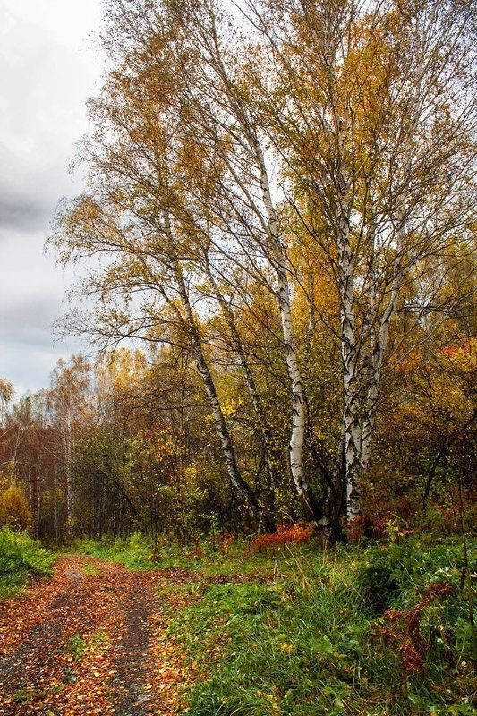 осень, сентябрь Осеннееphoto preview