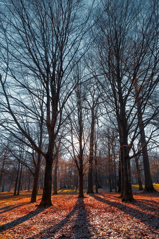 деревья, парк, небо, ветки, осень, листва, солнце, свечение, тени *В небо*photo preview