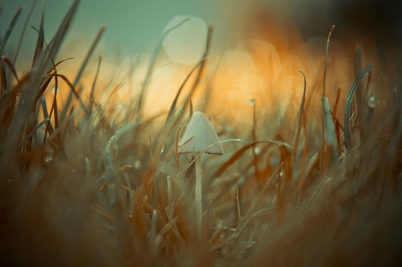 mushroom, macro, center, grass, post-processing In the middlephoto preview