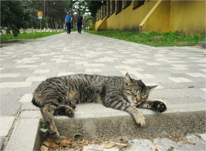 Кот с большой дорогиphoto preview