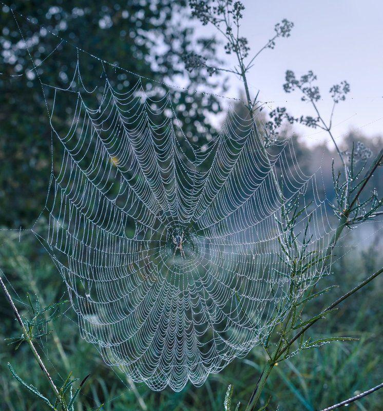паутина, сумерки, трава Паутинная шаль луговаяphoto preview