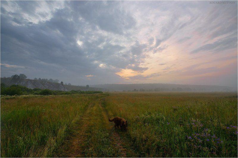 Чусовая, Слоюода, лето, туман, кутыгин, Россия,  Гуляю с собакой.photo preview