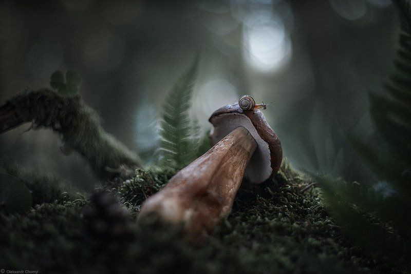 грибы, лес,макро, папоротник,природа, сумерки,украина,улитка, фотограф,коростышев, макро мир, макро красота, макро истории,поле́сье, Исследуя жизньphoto preview