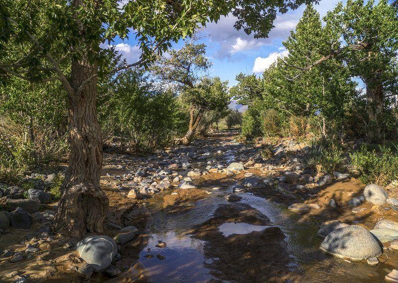 В пустыне чахлой и скупой ...photo preview