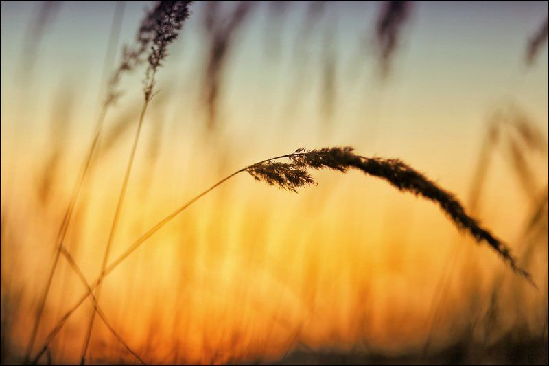 ---= трава-мурава =---photo preview