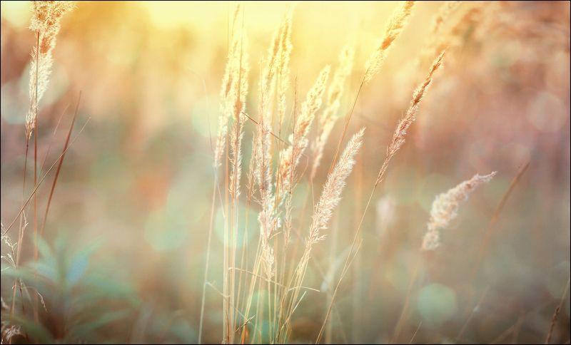 ---= трава-мурава + 1 =---photo preview