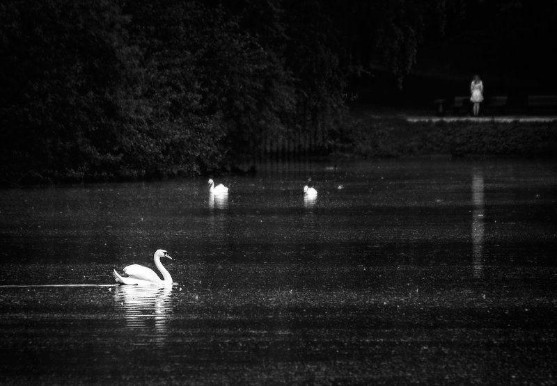 озеро, лебедь, дефушка photo preview