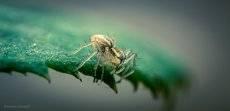 Микроскопический охотник...