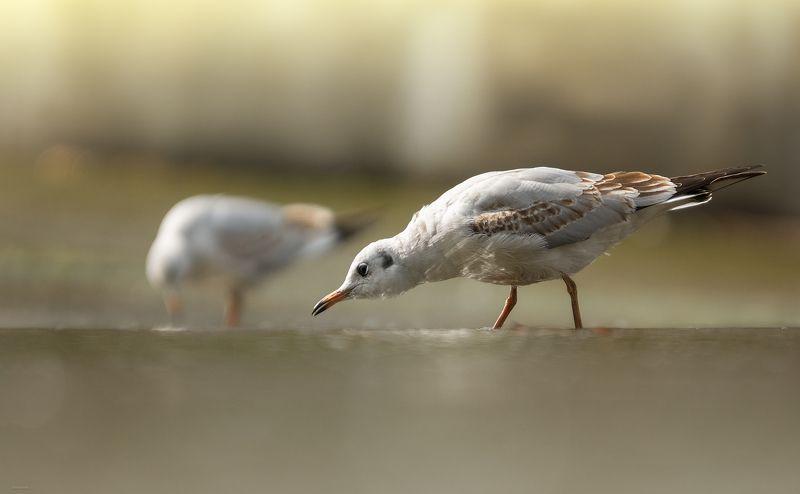 природа, лес, животные, птицы В поисках завтракаphoto preview