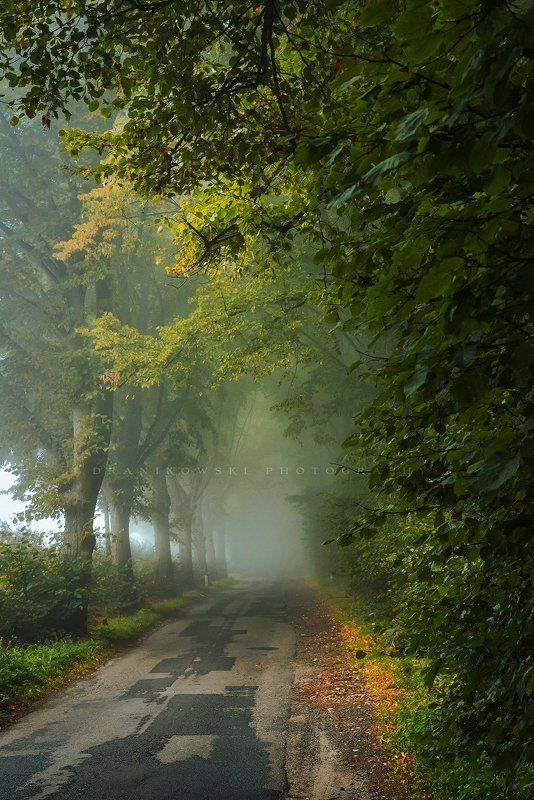 beginning autumn tree trees road path mist foggy magic beginning of autumn..photo preview