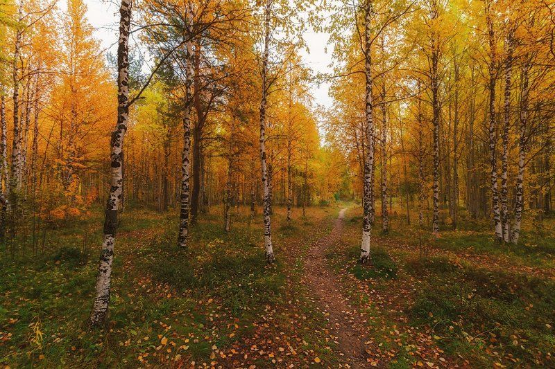 печора,коми,север,осень,золотая Осенний сентябрьphoto preview