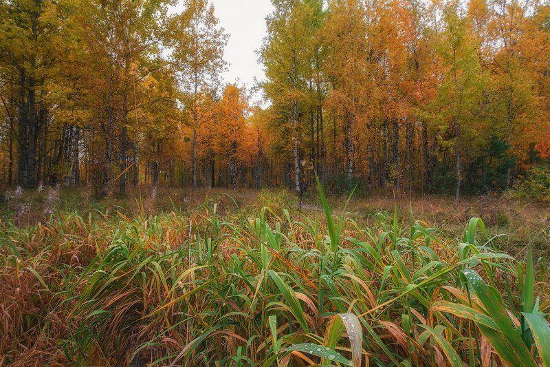 печора,коми,север,осень,золотая Осеньphoto preview