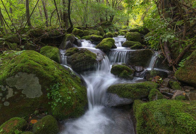stream, waterflow, running water, moss,  falls,  cascade,  summer Sangdong valleyphoto preview