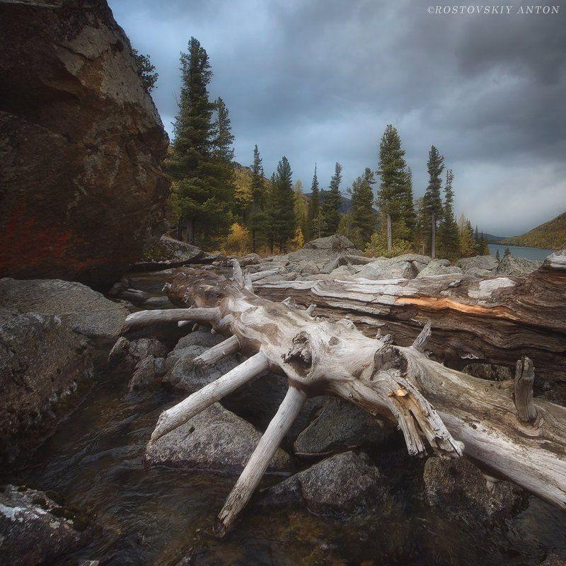 россия, алтай, пейзаж, коряга, мультинские на Мультинскихphoto preview