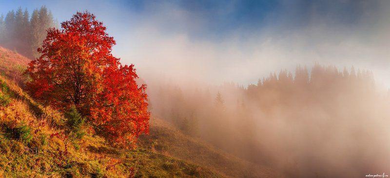 рассвет, туман, карпаты, горы, осень Над туманамиphoto preview