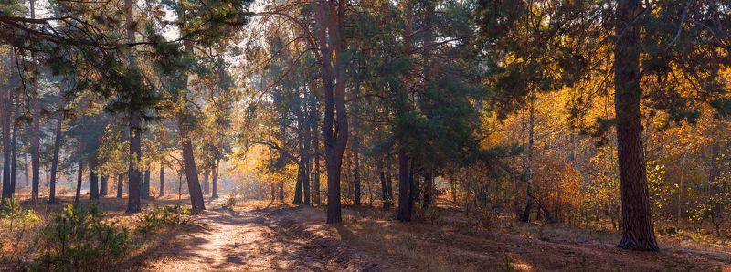 лес, осень, утро, октябрь Солнечный октябрьphoto preview