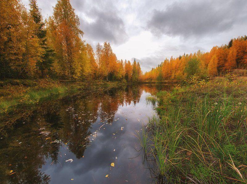 печора,коми,север,осень,золотая,autumn Золото севераphoto preview