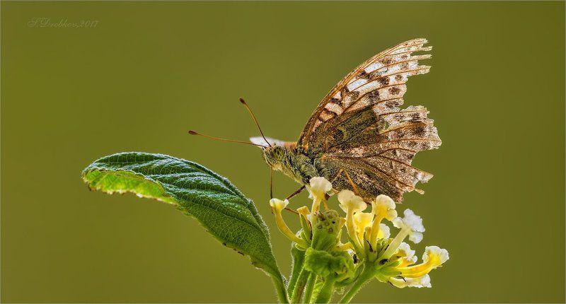 бабочка, осень, макро Осенний нектарphoto preview