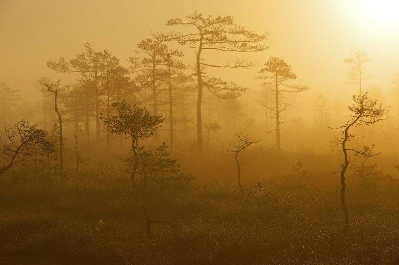 лес, ленинградская, область Туманный лесphoto preview